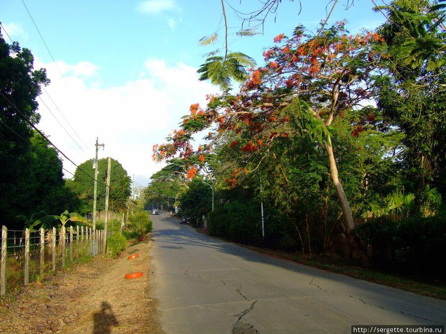 От одногорайона к другому дорога через зеленый массив