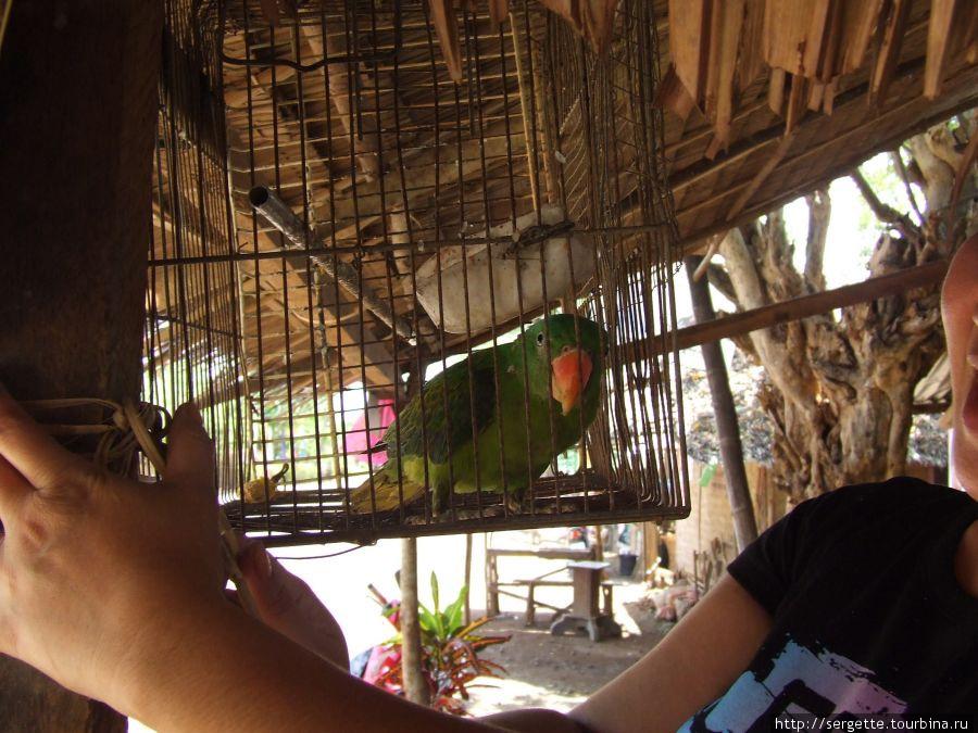 Попугай говорящий. Отвечает