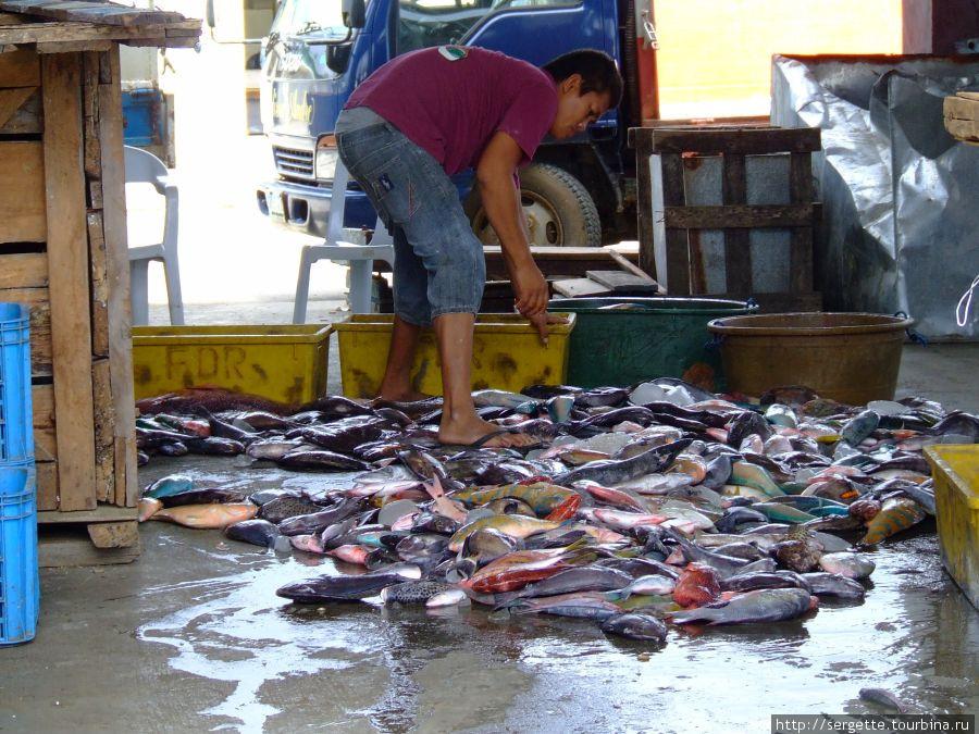 Приемщик рыбы