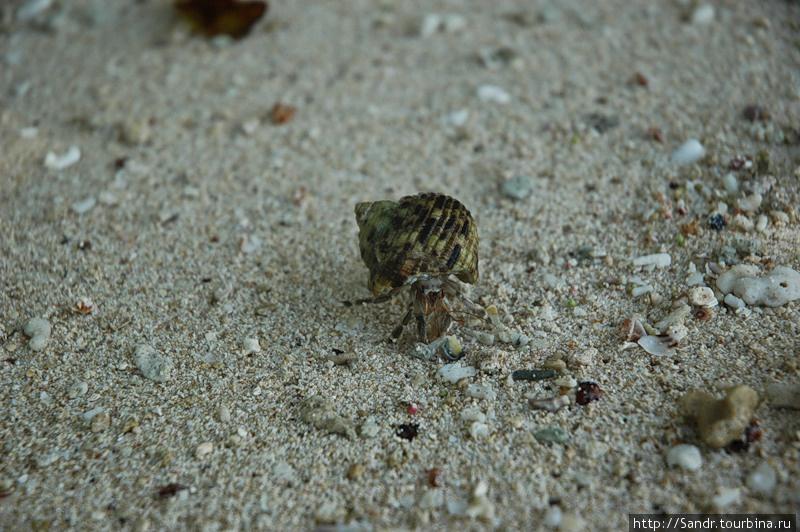 Морские раки (Гума) | пляж Отуа, ПНГ