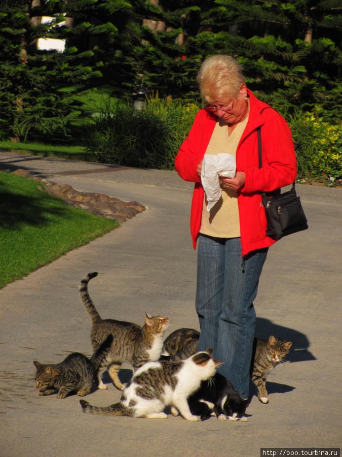ещё одна любительница кошек :)