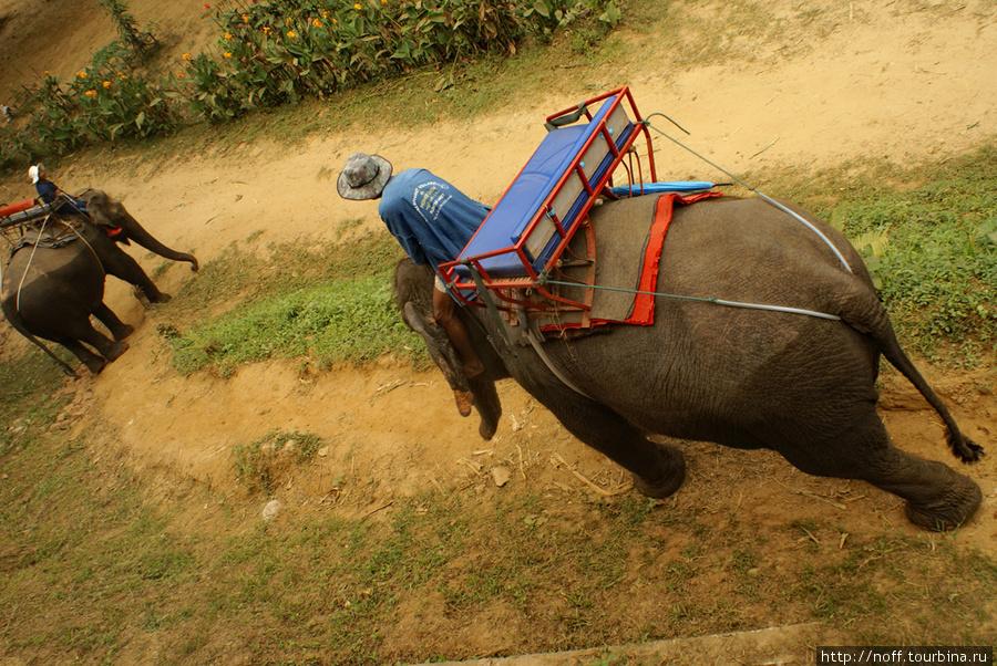 Потом мы поехали в сторону Бирмы, к слонам. Там приключился инцендент, когда один слон врезался в другого, а он испугался, оттолкнул погонщика и метнулся в заросли. Прямо с руссо-туристо на спине. Другие слоны дико заорали, погонщики немного напряглись, ну и мы тоже. Тем более наш слон спускался по склону к реке. И если бы он дёрнулся в сторону, то мы бы совершили полёт на катапульте в реку Квай. Но всё обошлось. Слоны умные.