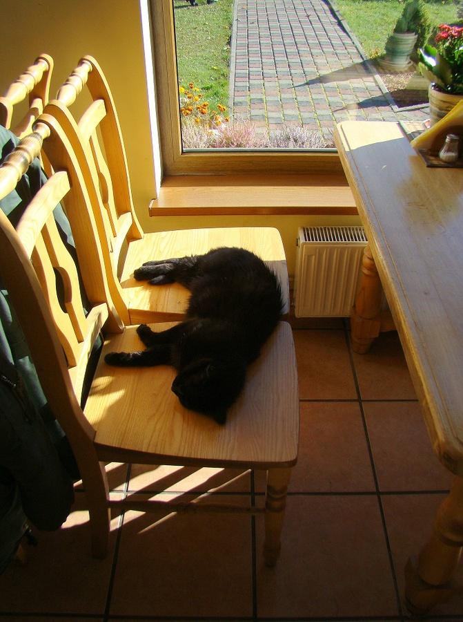 Черный кот, к чему бы это?