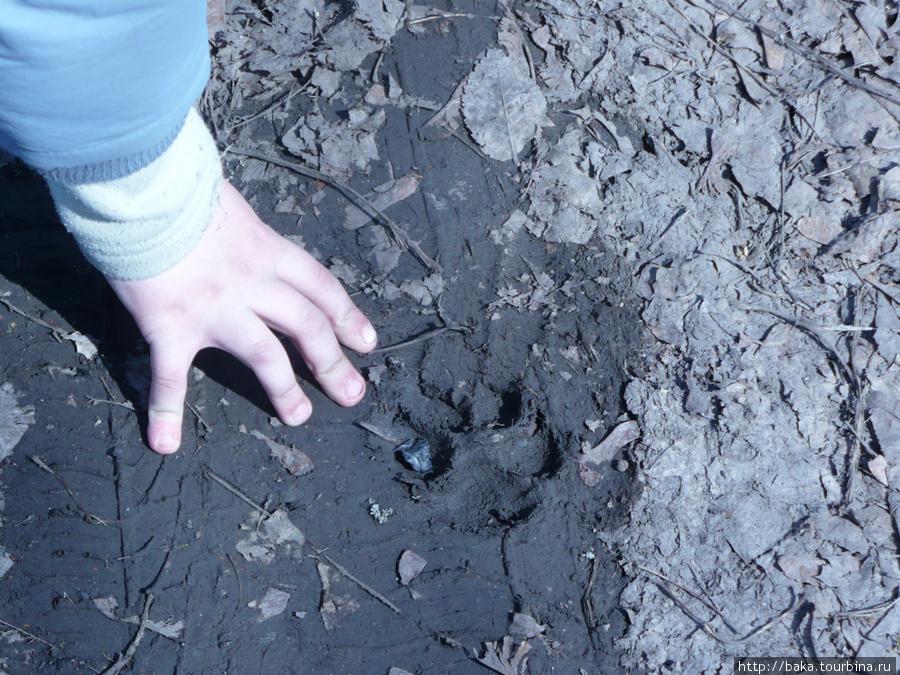 След слепой собаки прямо поверх следа хлебовозки мелкого Сидоровича!