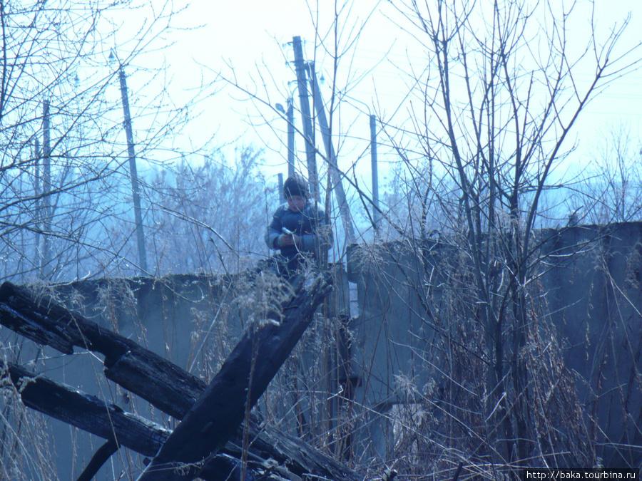 Сижу на Агропромовском заборе, издеваюсь над слепыми собаками!