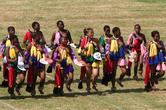 Традиционные Свазилендские танцы. По слухам, после таких выступлений король может пополнить свой гарем новой женой.