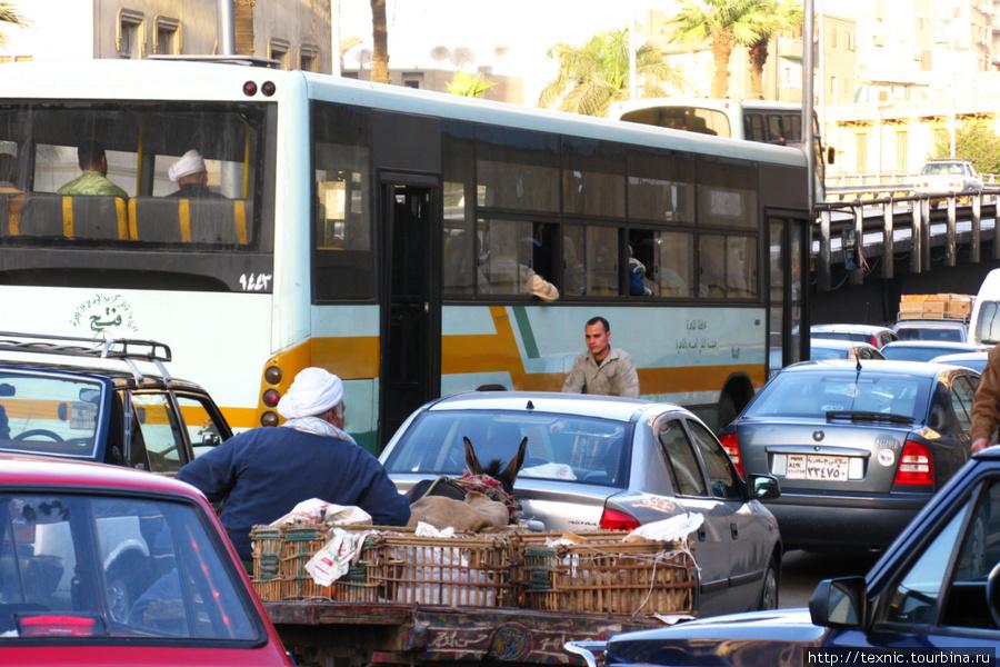 В Каире машины, гужевые повозки, автобусы —все вместе стоят в бесконечных пробках