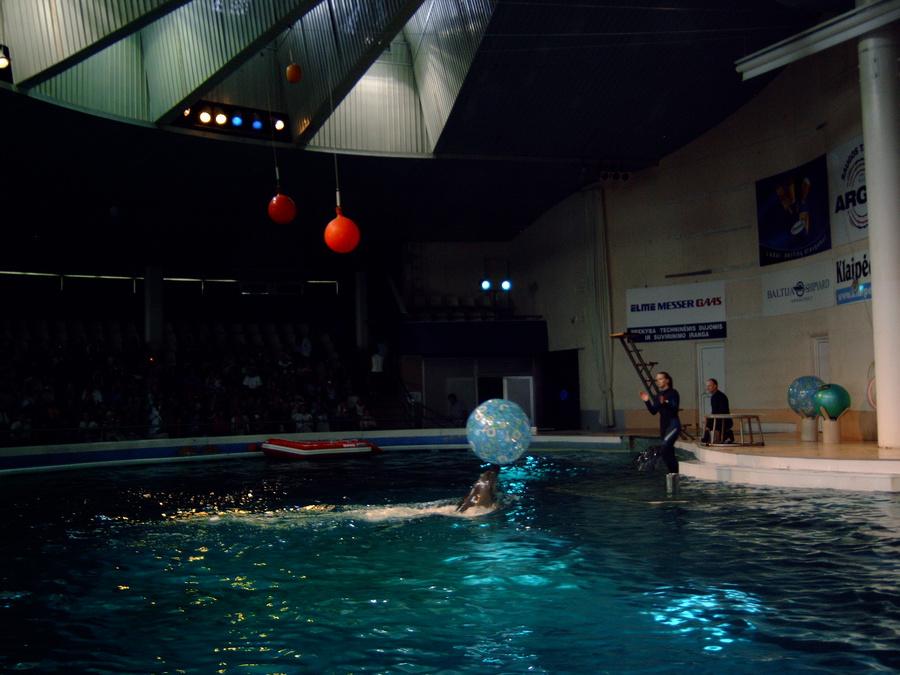 Дельфины весёлые и умные. Всегда видео, что они с огромным удовольствием иглают свои номера.
