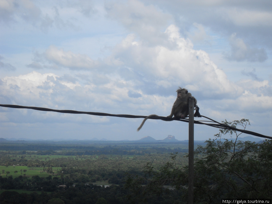 Люблю я этих обезьян в позе задумчивости