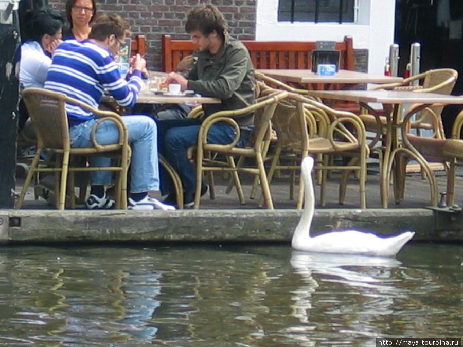 Лебеди, вытянув шеи, выпрашивают кусочки у посетителей.