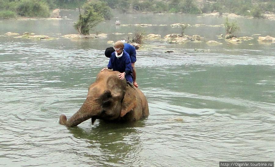 С каждым нырком слонов по