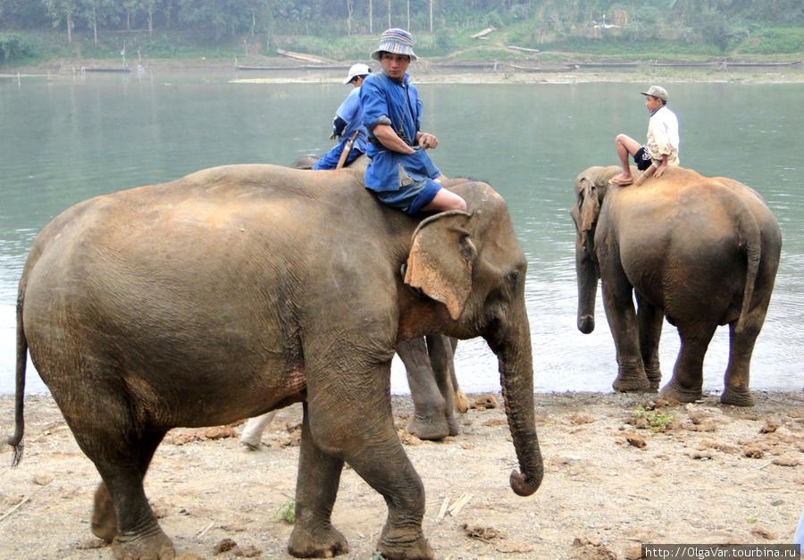Mahout — погонщики слонов