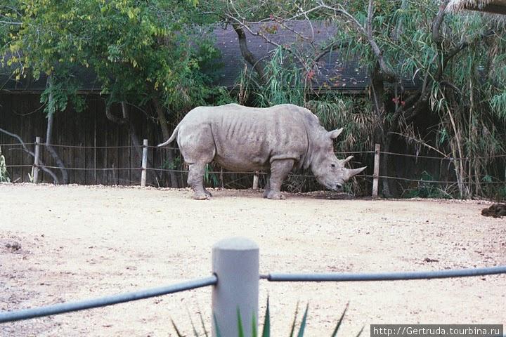 Белый африканский носорог.