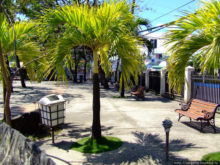 Деревья возле муниципалитета