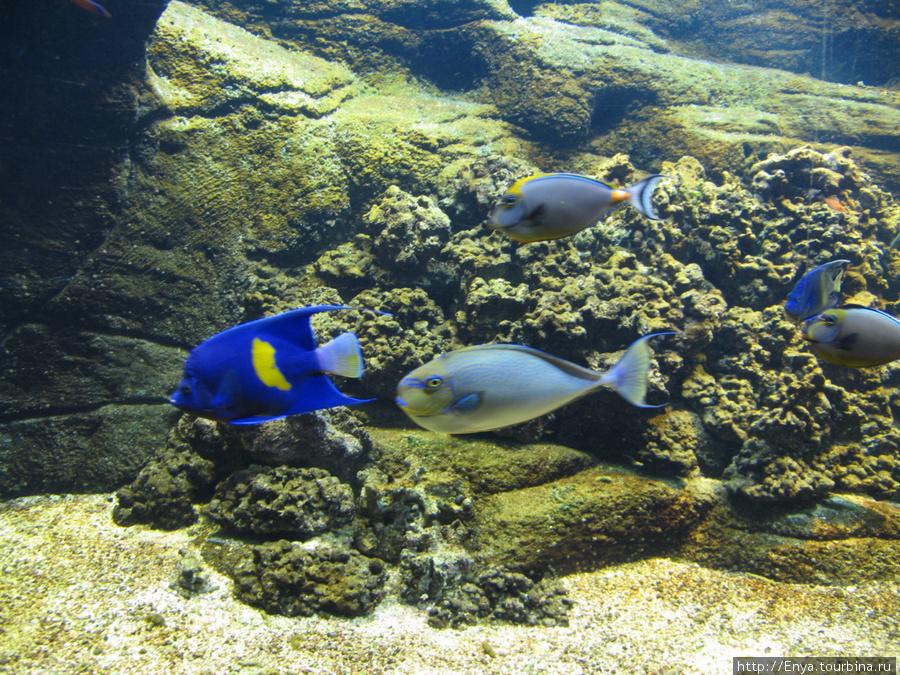 Критский аквариум.