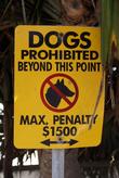 С собаками вход запрещен!