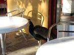В зоне общепита вместо голубей бродят «райские птицы».