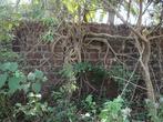 Ура, нашли форт. Древние стены в джунглях. Ни входа, ни выхода.