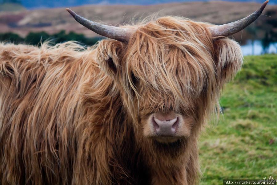 ntalka*Холодный суровый Скай*Остров Скай, Шотландия, Великобритания