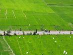 Рисовые поля в окрестностях Тук-Тука