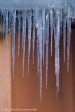 19.02.2011 года. Сосульке на крыше дома в Пшемышле