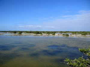 Экскурсия по полуострову Сапата: болота, где живет множество птиц
