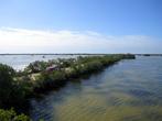 По болоту проходит такая туристическая тропа-дамба, без гида сюда не пускают.