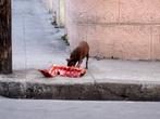 Вороне как-то Бог послал кусочек сыра... Ну а этой собаке повезло гораздо больше!