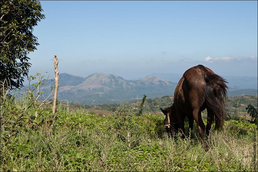 Все близлежащая территория покрыта вот такими небольшими горами, на которой гуляют лошади Тагайтай, Филиппины