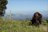 Все близлежащая территория покрыта вот такими небольшими горами, на которой гуляют лошади