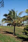 Кстати, кокосы тут всего по 20 песо, так как везде они по 50