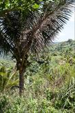 Чем ниже, тем больше кокосовых пальм и вообще крупной растительностиВторой лагерь — если вы пошли кругом, то с вас и тут ещё возьмут 20 песо. Этот трейл называется Старый, а тот, по которому пошли мы — новый