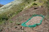 На склонах местные сушили арахис