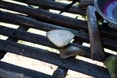 А это первый кусок от кокоса — он используется как ложка, что бы есть мягкую внутренность кокоса