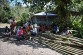 У подножья местные заготавливают бамбук