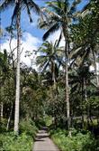 Сначала дорога тут бетонная и идет вдоль кокосовой рощт