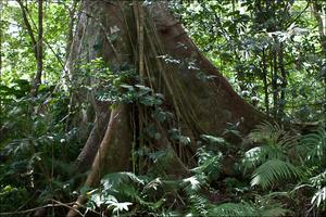 Чем выше, тем лес становится интереснее