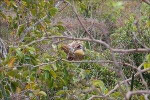 Гнездо какой то местной птицы