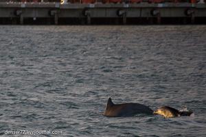 35. Вслед за паромом мелькнули и исчезли в направлении к океану дельфины
