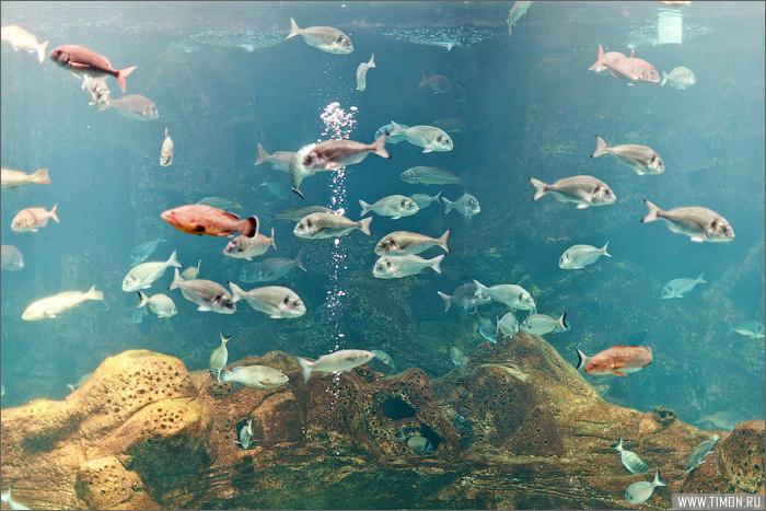Критский океанариум Херсониссос, Греция