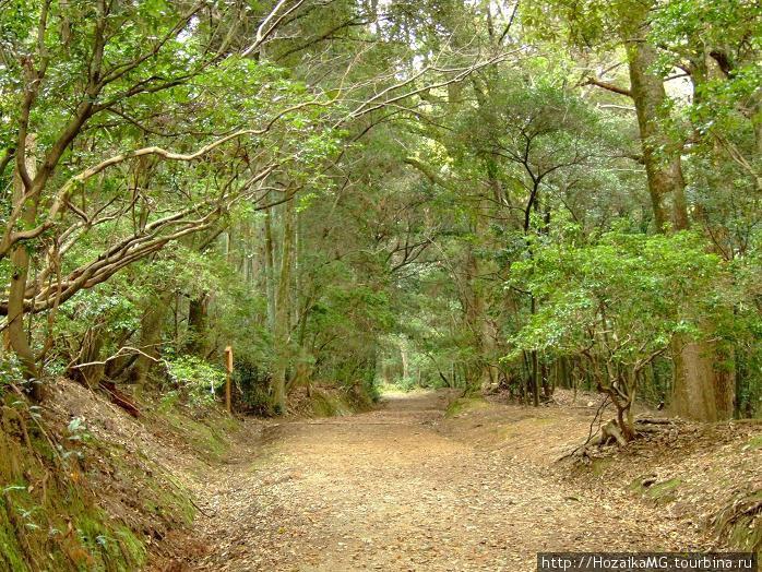 Японский лес