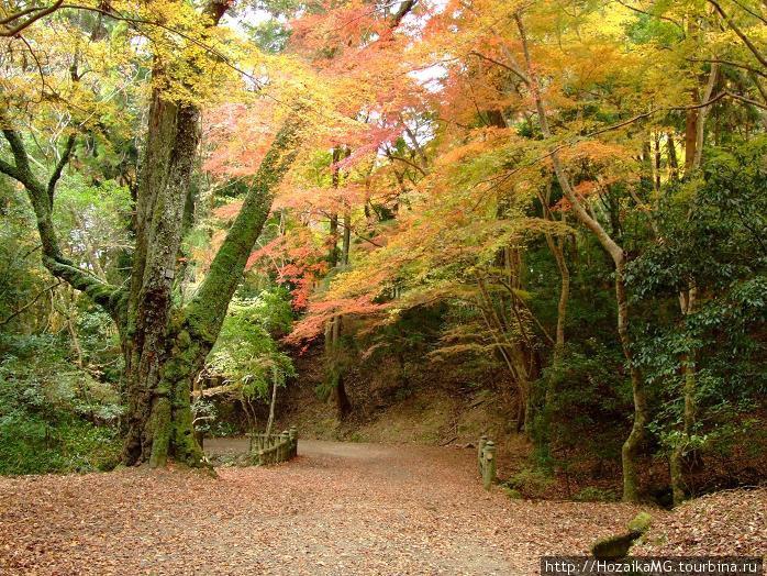 Осенний лес в Нара