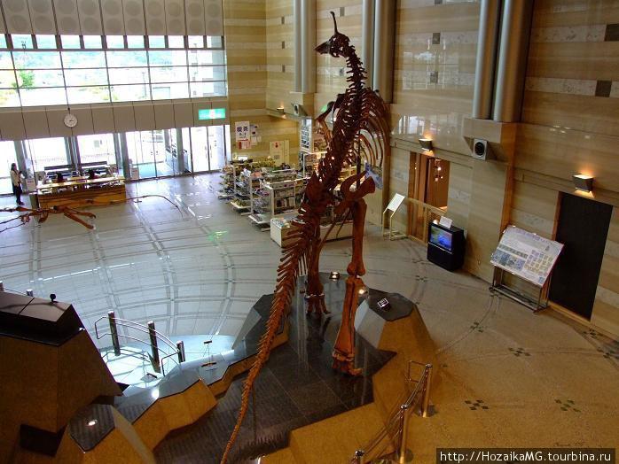 Музей Естественной истори