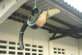 Украшение поликлинику — тукан из покрышки