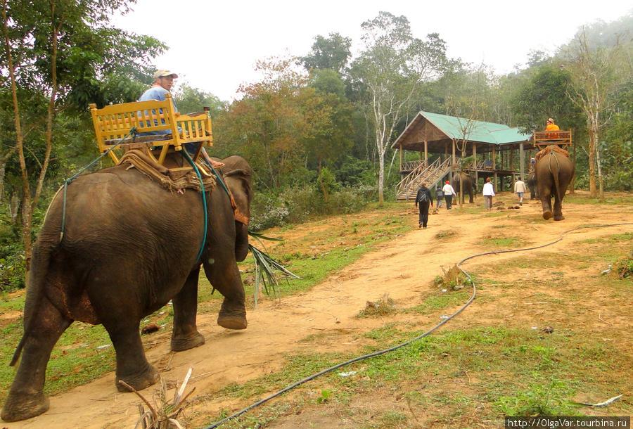 Слонихи идут на работу. Загружаешься в кресло со специального  сооружения, к которому все и направились