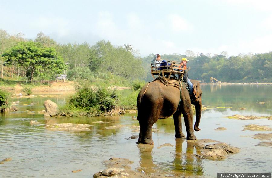 Некоторые смело уселись на «загривок» своих слоних и вполне, не хуже настоящего погонщика, справлялись с новой почетной должностью.