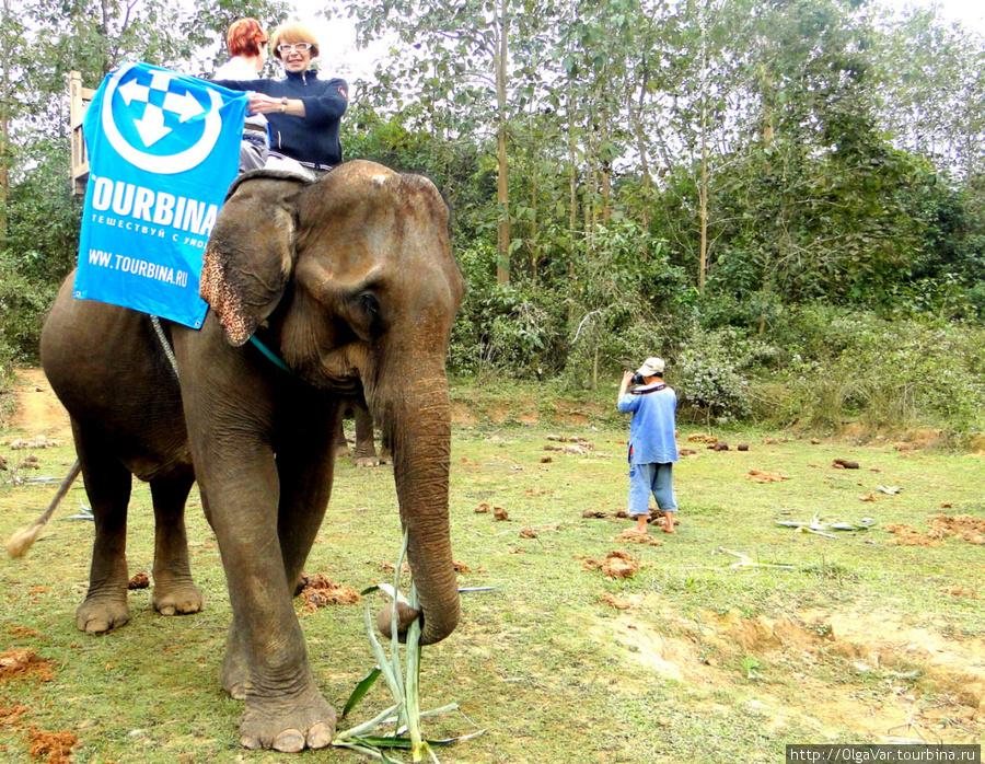 С Турбиной на слонихе Хамли