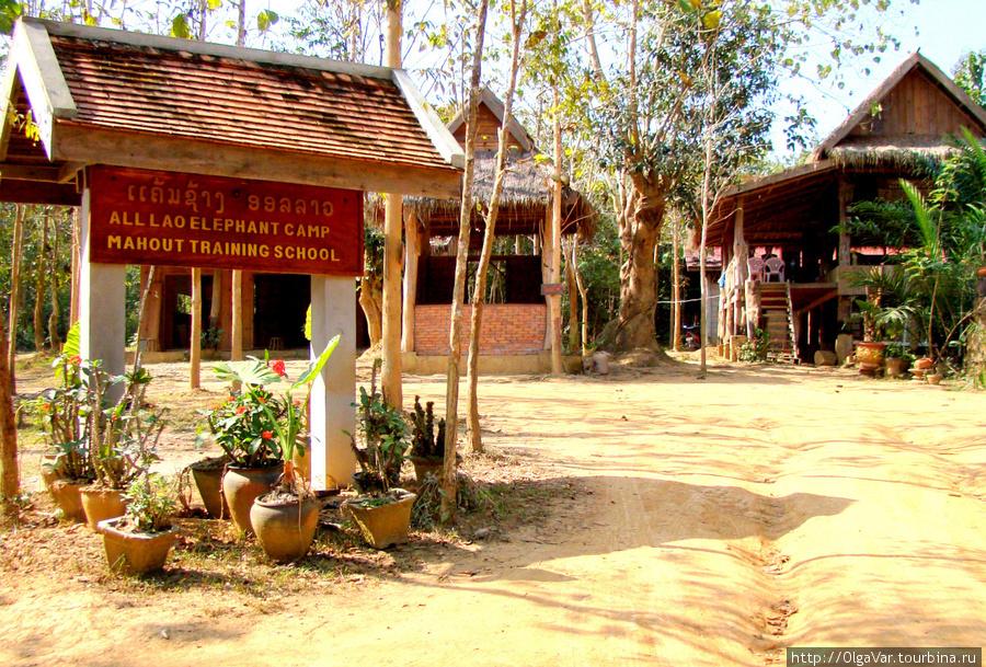 Школа обучения слонов