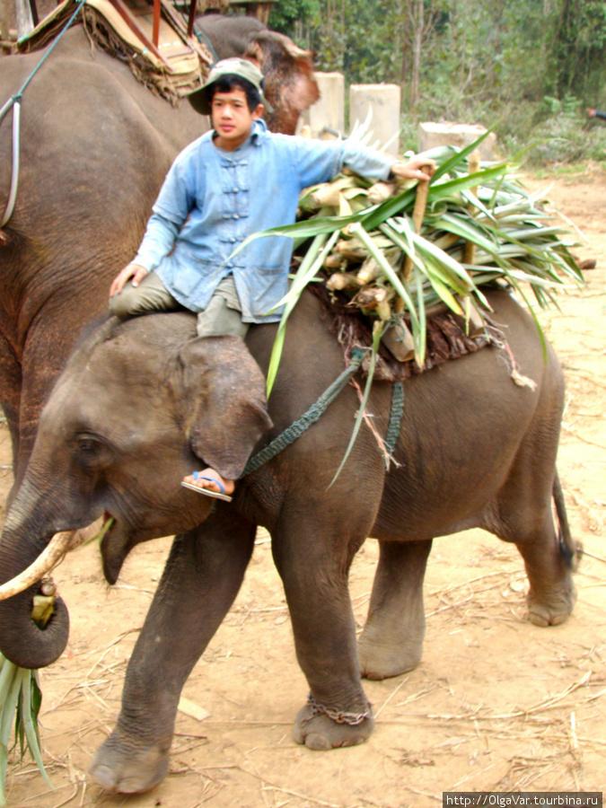 Маленький слоник с фуражом