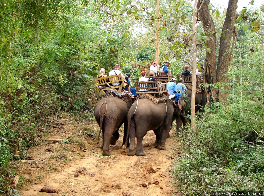 Слоны дружною толпою....Главное, чтобы в этот момент не подрались